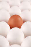 Lonesome egg Royalty Free Stock Image