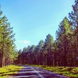 Road trip trough the woods royalty free stock photography