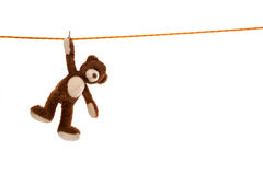 Lonesome isolated plush teddy bear hanging on a clotheline on white Royalty Free Stock Photos