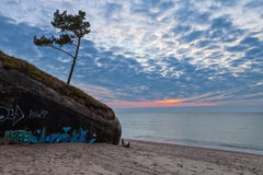 Lonesome mood at sunset. Lonely pine tree growing above the old destroyed fort on Baltic sea coast at cloudy moody sunset Stock Photography