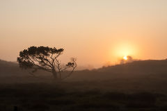 Lonesome skew-whiff tree on meadow in the early morning sunrise with sun shining through fog Stock Photo