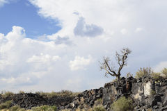 Lonesome tree. Dead barren tree on a remote, boulder covered cliff, with rain clouds overhead Stock Photography