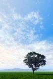 Lonesome Tree. Lonesome digital tree on the prairie royalty free illustration