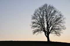 Lonesome tree. E in winter in front of horizon Stock Photo