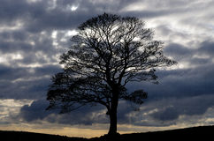 Lonesome tree in England Royalty Free Stock Photo
