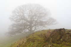Lonesome tree Stock Images