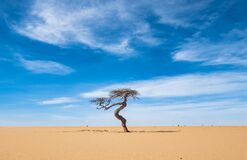 Free Lonesome Tree In The Desert Stock Images - 178117304