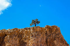 Lonesome tree Royalty Free Stock Images