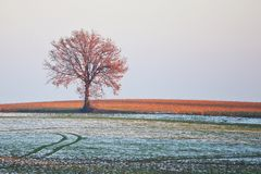 Lonesome tree in winter Royalty Free Stock Image