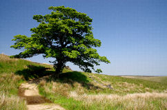 Lonesome tree in the Yorkshire Dales Stock Photo