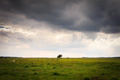 Loney drzewa krajobraz z zieloną trawą i zmroku popielatym niebem z nią Fotografia Stock