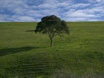 Loney träd i grönt fält Arkivfoton