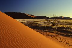 A loney tree in Sossusvlei Namibia Royalty Free Stock Images
