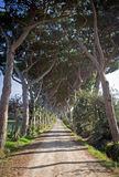 Long Access Road with Trees. In Italy (Tuscany&#x29 Stock Photo
