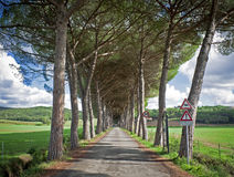 Long Access Road with Trees. In Italy (Tuscany royalty free stock image
