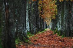 Long alley at fall autumn sesson. Representing infinite concept Royalty Free Stock Image