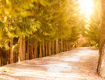 Long alley in the park along forest Royalty Free Stock Photo