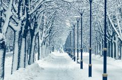 A long alley in the shape of a tunnel of snow covered trees royalty free stock photography