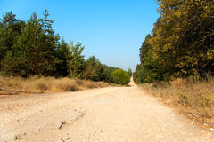 Long And Wide Forest Road Stock Image