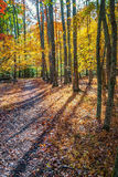Long Autumn Shadows. Colorful leaves and long shadows on this sunny Autumn day at Allaire State Park n New Jersey Stock Photos