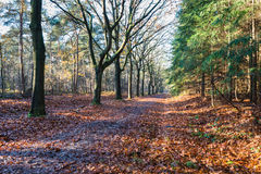 Long avenue in a forest in autumn colors Stock Image