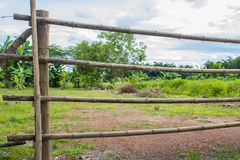 Long bamboo fence background with nature tree and sky.  Stock Photos