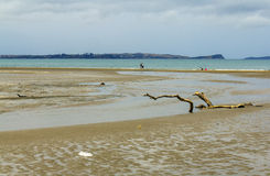 Long Bay Auckland New Zealand. Low Tide time at Long Bay Auckland New Zealand Royalty Free Stock Images