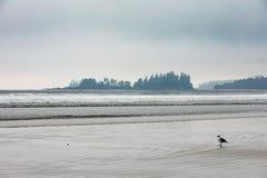 Long Beach annebbia BC l'isola Canada di Tofino Vancouver fotografie stock