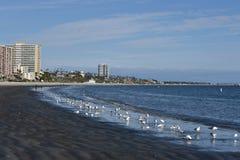 Long Beach, CA/USA - Marzec 8, 2019: Nafciani driling odpady czernią plażę w Long Beach obrazy royalty free