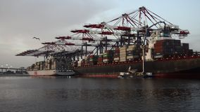 Port of Long Beach stock video footage