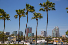 Long Beach California skyline from palm trees of port Stock Image