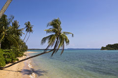 The long beach with coconut tree Royalty Free Stock Images