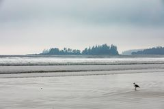 Long Beach Fog Tofino Vancouver Island BC Canada stock photos