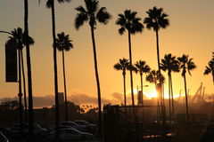 Long Beach golden sunset. Against the backdrop of palm trees and docks Royalty Free Stock Image