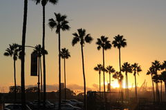 Long Beach golden sunset. Against the backdrop of palm trees and docks Royalty Free Stock Photo