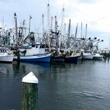 Long Beach Harbor. Beautiful picture of shrimp boats in harbor on beach royalty free stock image
