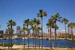 Long Beach Kalifornia linia horyzontu od drzewek palmowych port Fotografia Stock