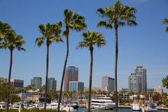 Long Beach Kalifornien horisont från palmträd av port Fotografering för Bildbyråer