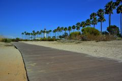 Long Beach -Palmen Stockfoto