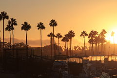 Long Beach sunset. Long Beach golden sunset against the backdrop of palm trees and yachts Royalty Free Stock Photo