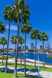 Long Beach waterfront with palms, skyline and harbor, CA  (P) Stock Photos