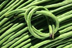 Long Bean Royalty Free Stock Photo