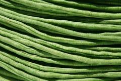 Long Bean Stock Photography