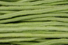 Long bean or cowpea as green background Stock Image