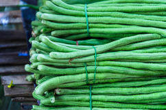 Long bean in market. Stock Photos