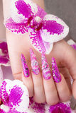 Long beautiful manicure with flowers on female fingers. Nails design. Close-up Royalty Free Stock Image