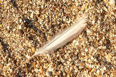 Long bird feather. Lying on the sea shells on the shore Royalty Free Stock Photo