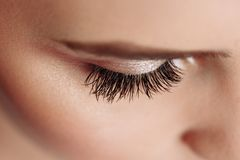 Long Black Eyelashes. Closeup Of Beautiful Woman Eyebrow And Big Eye With Fake Lashes. Beauty Cosmetics. High Resolution stock photo