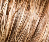 Long blond hair as background Royalty Free Stock Photography