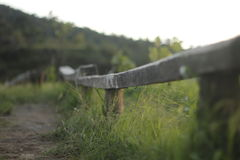Long board chair. At the green garden green highland love peace root Royalty Free Stock Photography